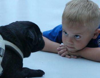 Comment introduire votre Cane Corso à vos enfants ?